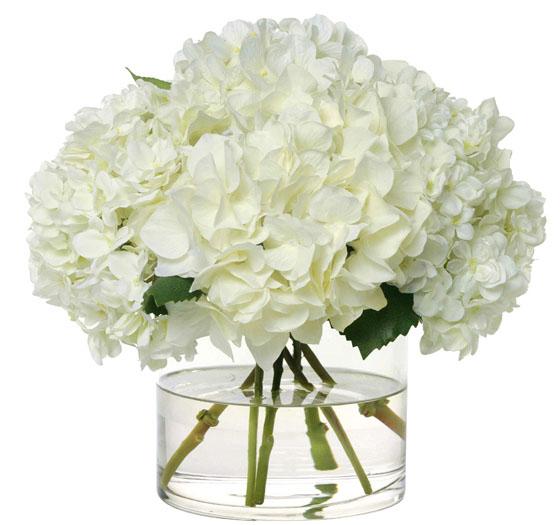 Heavenly White Hydrangeas