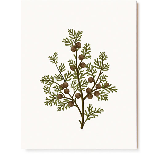 CLAP CLAP HINOKI SCENTED CARDS / SET OF 5
