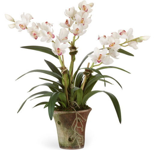 WHITE CHINESE CYMBIDIUM ORCHID