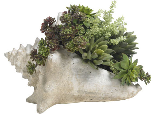 SUCCULENTS IN FAUX SHELL
