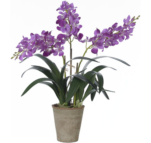 BLOOMS PURPLE VANDA ORCHID