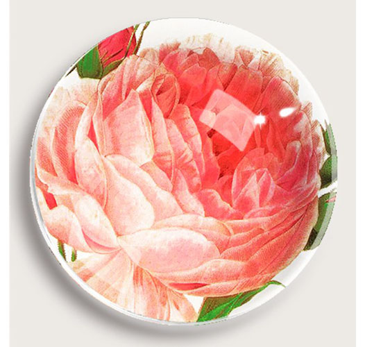 BEN'S GARDEN DAVID AUSTIN ROSE PAPERWEIGHT