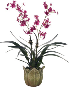 Diane James Pretty Pink Oncidium