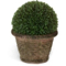 Diane James Boxwood Ball Topiary