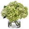 Diane James Heavenly Green Hydrangeas