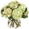 Diane James Pale Green Hydrangeas