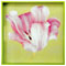 Diane James Dutch Tulip Tray